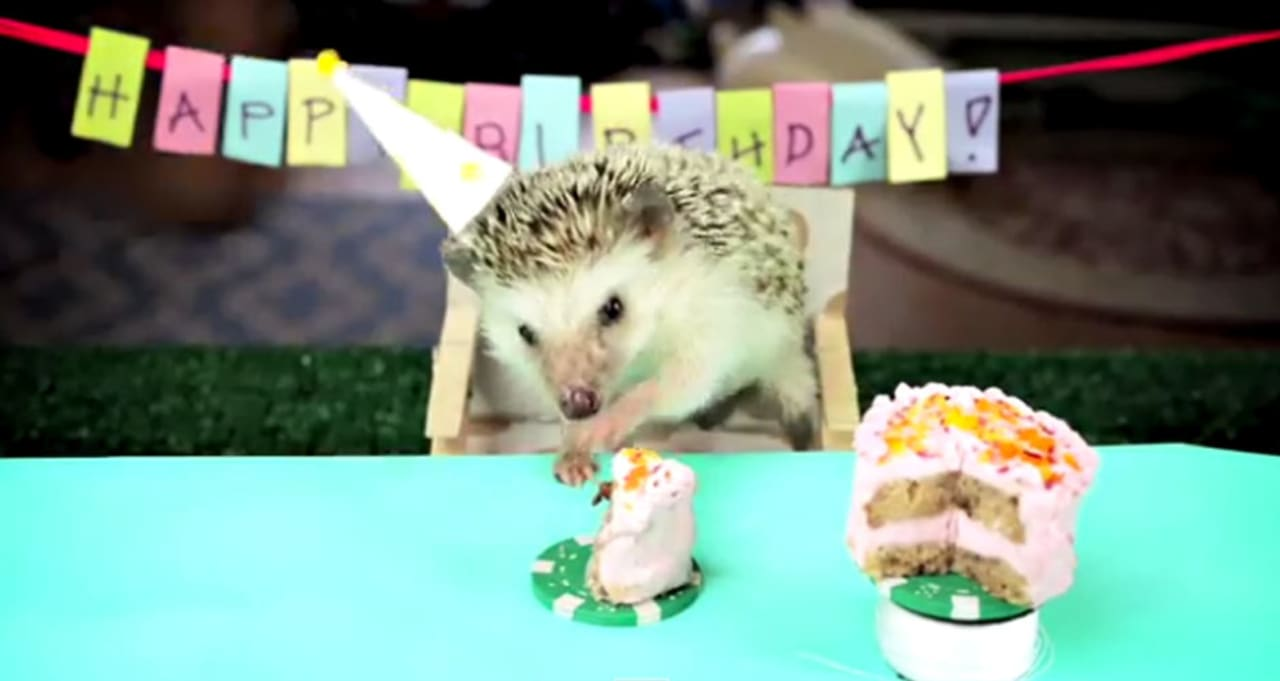 Surprising Watch Tiny Rodents Eat Birthday Cake First We Feast Funny Birthday Cards Online Inifofree Goldxyz