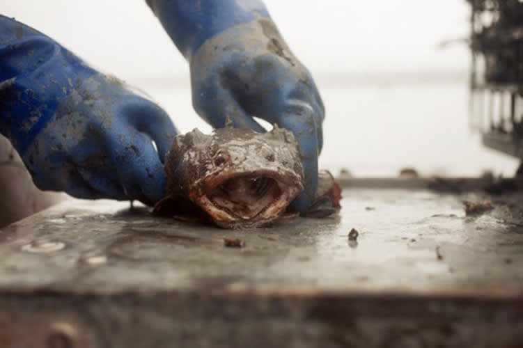 Here Are Some Terrifying and Weird Sea Creatures You Might