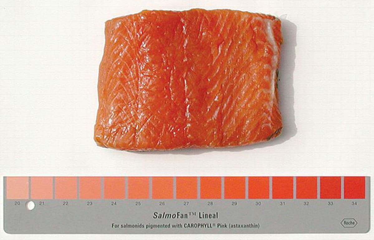 Farmed Salmon Is Naturally Gray, Has Color Added to It | First We Feast