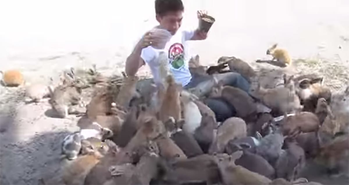 Watch a Guy Get Attacked by Adorable Bunnies While Feeding Them