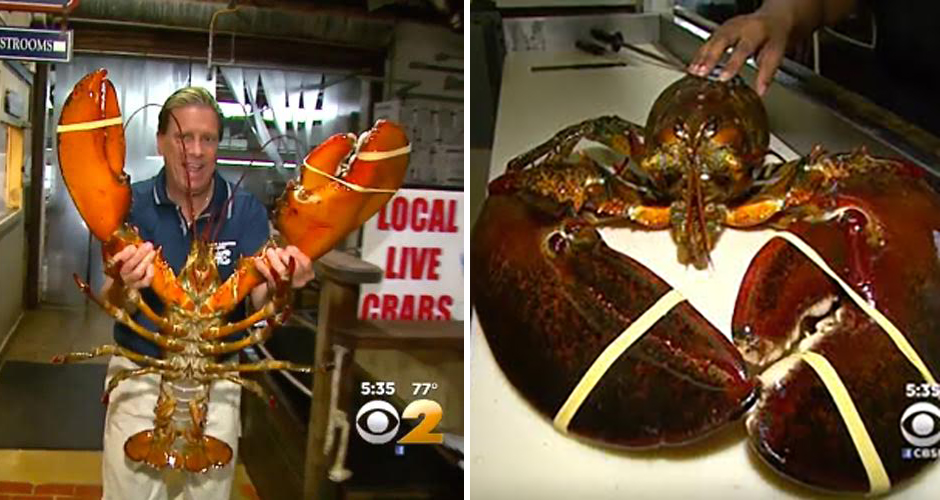 Meet the 23-Pound, 95-Year-Old Lobster That a Long Island Restaurant Refuses to Cook | First We ...