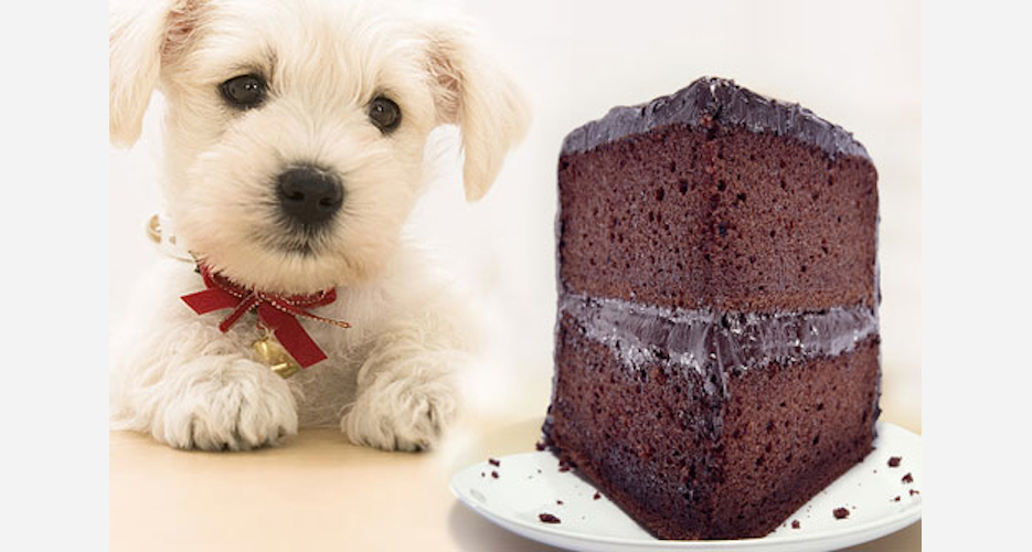 20 Dogs That Are About To Steal Your Food First We Feast