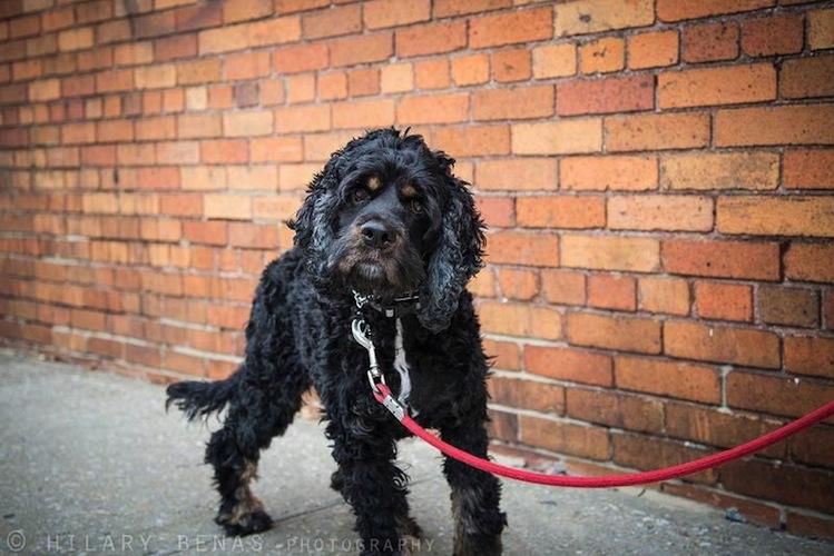 Dog Charms Breeds Nyc