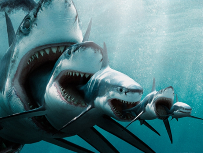 Everything you need to know about eating shark first we for What do fish eat in the ocean