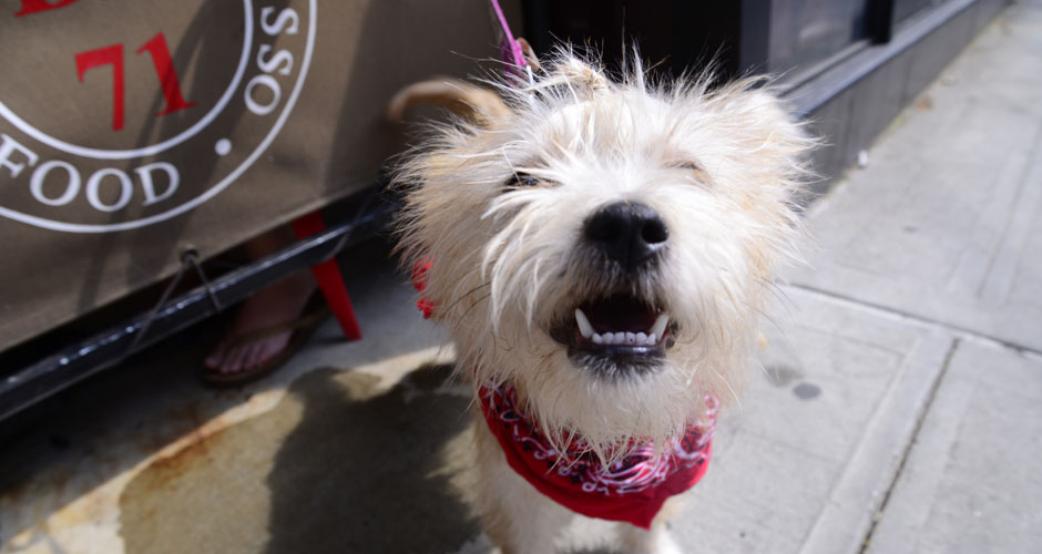 Dog Friendly Bars Williamsburg Nyc