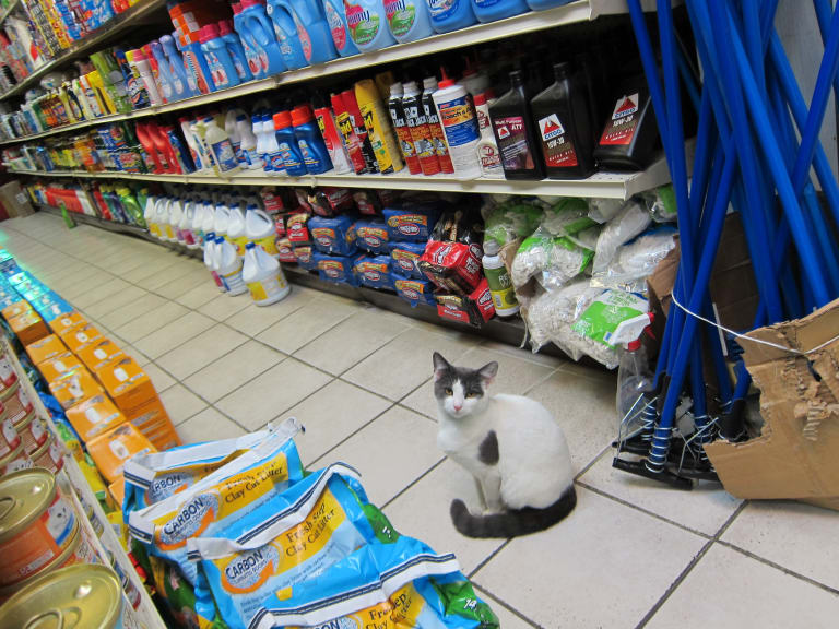 Twitter Is Dragging This Woman Who Complained About a Bodega Cat on